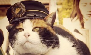 Celebrate 8 Funny And Bizarre Working Cats This Labor Day