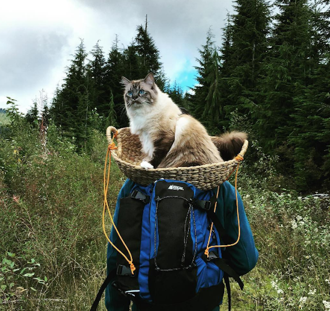 Adventure-Cat-Mishka
