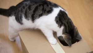 5 Brain Games To Keep Your Cat Mentally Stimulated