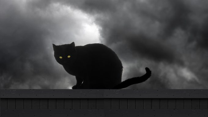 black cat on fence at night