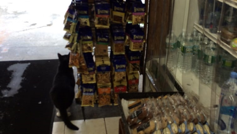 bodega-cat-yelp-4