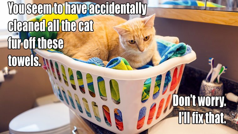 cat-owners-know-2