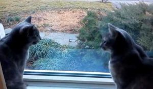 Cat Chat: Two Cats Having A Conversation [VIDEO]