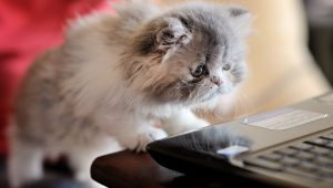 10 Ways Your Life Will Change When You Adopt A Cat