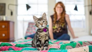 National Cat Day – October 29th – What You Should Know