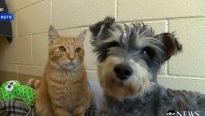 Romeo The Cat And Juliet The Dog Are Inseparable At The Shelter