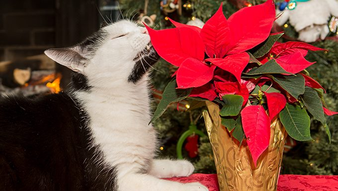 cat sniffs house plant