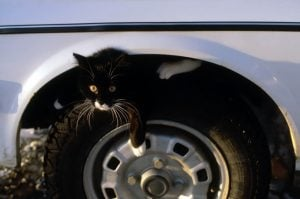 Six Of The Most Preventable Cat Accidents