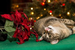 Winter Dangers That Could Kill Your Cat