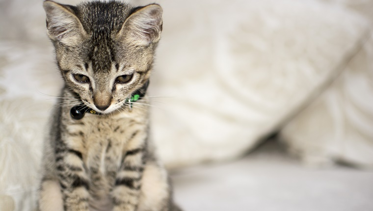 Sad looking kitten. Soft focus is expected due to shallow depth of field to isolate the subject.
