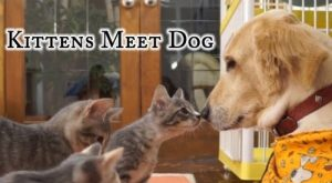 Kittens Meet Dog [VIDEO]