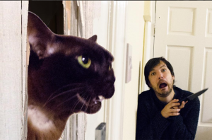 UK Couple Recreate Iconic Movie Scenes Using Their Cats And It's Awesome