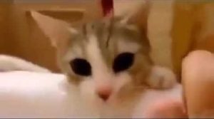 Adorable Kitten Tries To Save Her Human From Bathtub [VIDEO]