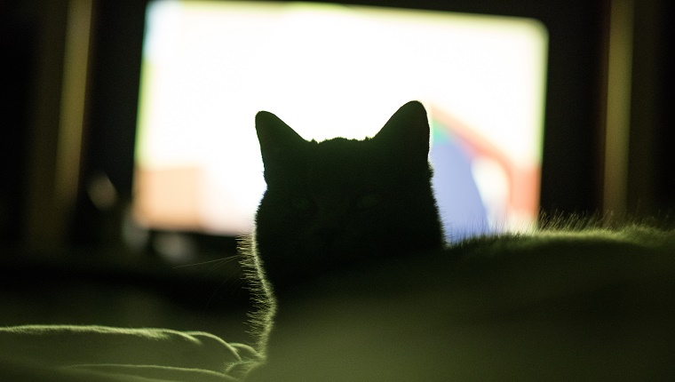 Mysterious cat in the bedroom in front of the TV, it`s face is not visible, only it`s silhouette.