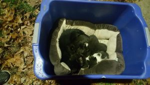 Male Cat Protects Abandoned Kittens From Cold And Rain [RESCUED]