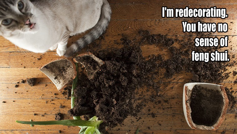things-your-cat-wants-to-say-10