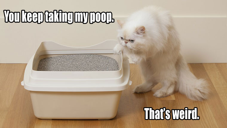 things-your-cat-wants-to-say-2 (2)