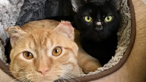 Trio Of Bonded Cat Brothers Survive Freezing Temperatures By Huddling Together