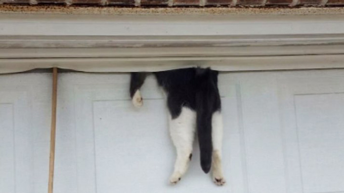 cat-trapped-garage-door-2