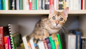 Cats Can Remember Things Better Than You Might Think