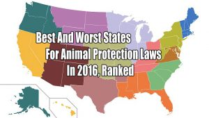The Best And Worst States For Animal Protection Laws In 2016, Ranked
