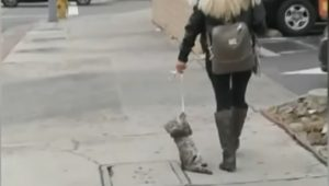 Woman Dragging Cat Tasers Bystander Who Called Her Out For Abuse And Flees