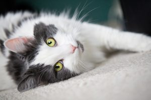 Ways To Help Your Cat Live Longer