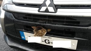 Cat With Its Head Stuck In Car Grille Saved When Police Pull Over The Driver