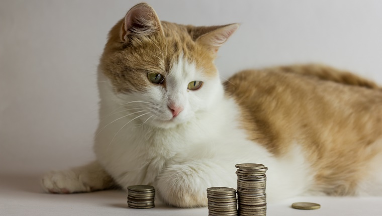 red Cat and heap of coins against white