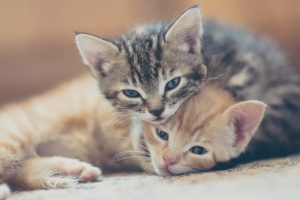 New San Francisco Law Requires All Pet Stores To Sell Rescue Cats And Dogs Only