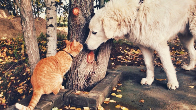 Dog And Cat Smelling Tree