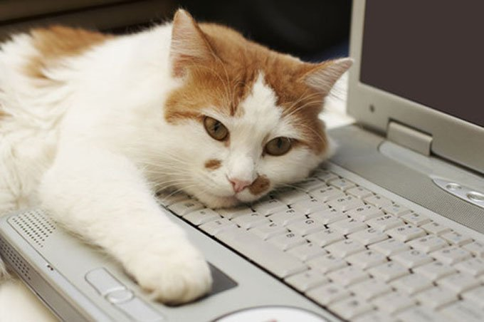 Cats are softer than computers. (Photo Credit: Shutterstock)