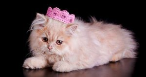5 Ways Your Cat Is Like Royalty (And You A Servant)