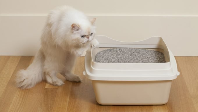 cat next to litter box