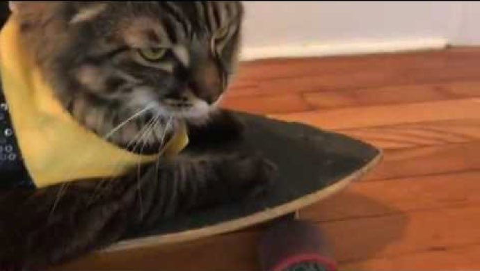 Cleveland Heights Cat Shreds On The Skateboard Video