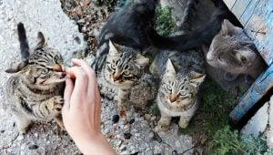 Should Feral Cats Be Tamed?