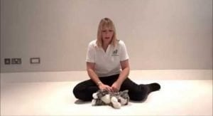 How To Give CPR To A Cat