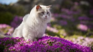 Spring Shedding: What To Do When Your Cat Loses Their Winter Coat