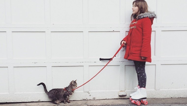 Little girl in a red winter coat wearing roller skates and walking her pet tabby cat on a leash.