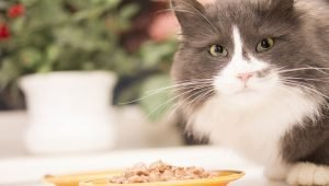 10 Foods And Supplements That May Help Fight Or Prevent Cancer In Cats