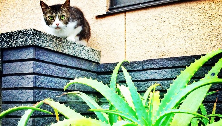 Cat On Retaining Wall