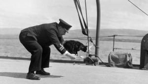 8 Brave Cats Who Served The Armed Forces