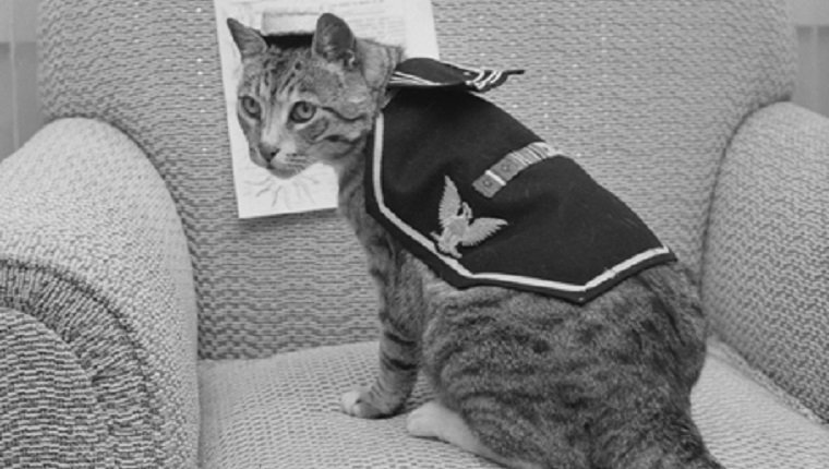 military-cats-6