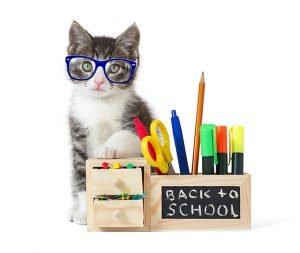 5 Ways To Prep Your Cat For Back To School