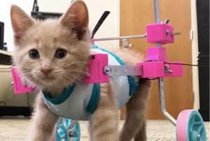 Special Needs Cat Of The Week: Chloe