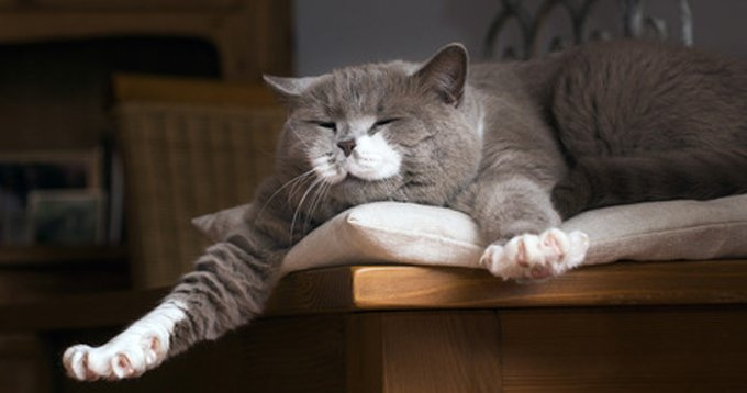 Give your cat room to stretch (without stretching your purse strings). (Picture Credit: Shutterstock)