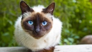 5 Of The Most Popular Cat Breeds Around The World