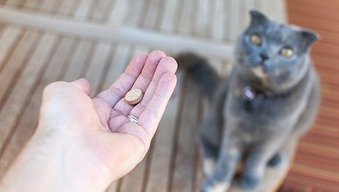 owner gives prednisone to cat