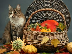 Safe Thanksgiving Foods To Share With Cats & Some To Avoid