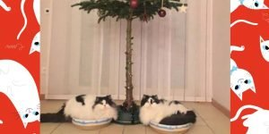 7 Christmas Tree Alternatives For Cat Owners